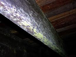 Five Most Toxic Types Of Mold Mold Inspection Usa Mold